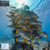 Virtual diving with Google Underwater Street View